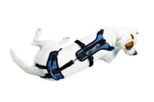 home-white-dog